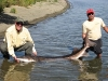 Hanford Sturgeon